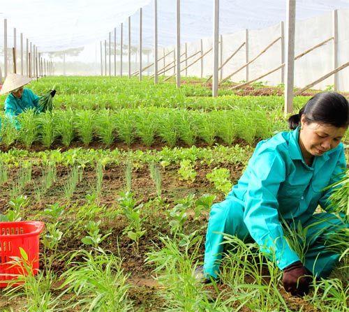 Nông dân làm gì để tăng thu nhập một cách nhanh